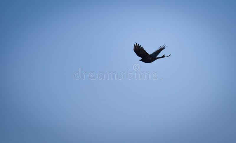 Bird flying on the sky stock photo