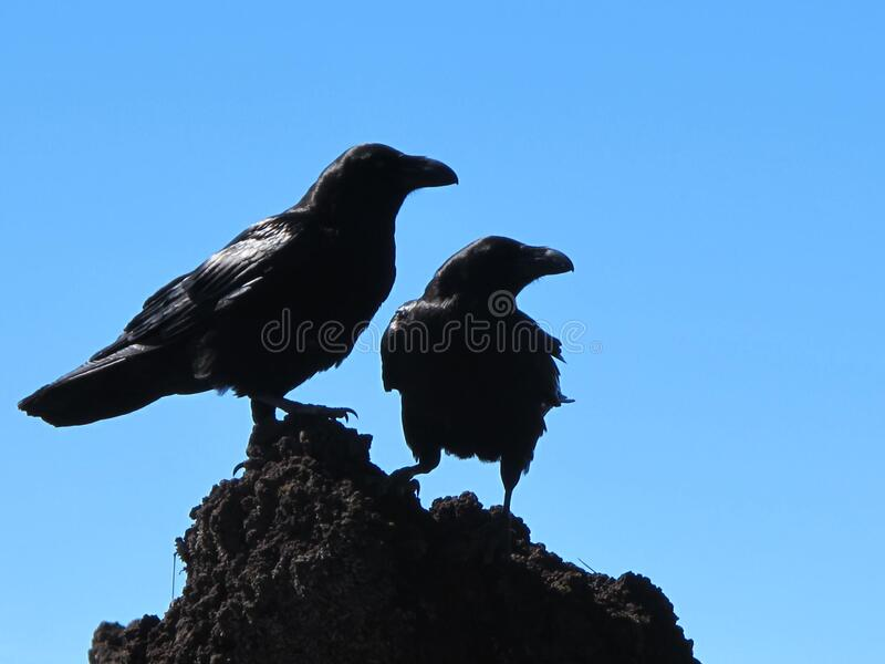 Black Birds Against Blue Skies Free Public Domain Cc0 Image