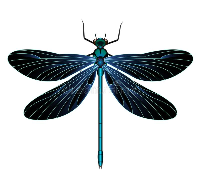 Black and blue dragonflies-dragonfly royalty free illustration