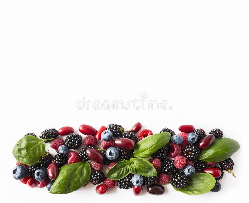 Black-blue and red berries isolated on white. Ripe blackberries, blueberries, raspberries, cornels and basil leaves on white backg. Round. Berries at border of royalty free stock photography