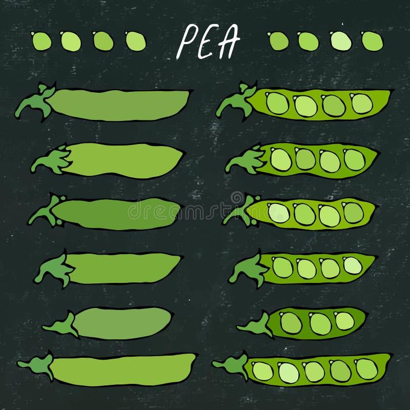 Black Board. Green Pea Pod. Healthy Bio Vegetarian Food. Realistic Hand Drawn High Quality Vector Illustration. Doodle royalty free illustration