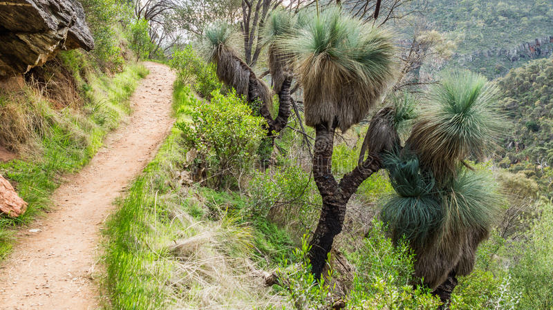 Footpath in the habitat of Australia Grass Tree stock images