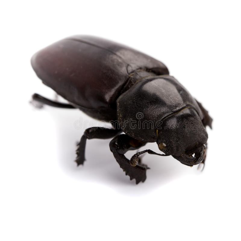 Download Black bug stock photo. Image of creepy, body, unhygienic - 10705582