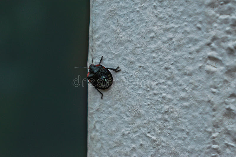Black Bug on a Wall royalty free stock photography