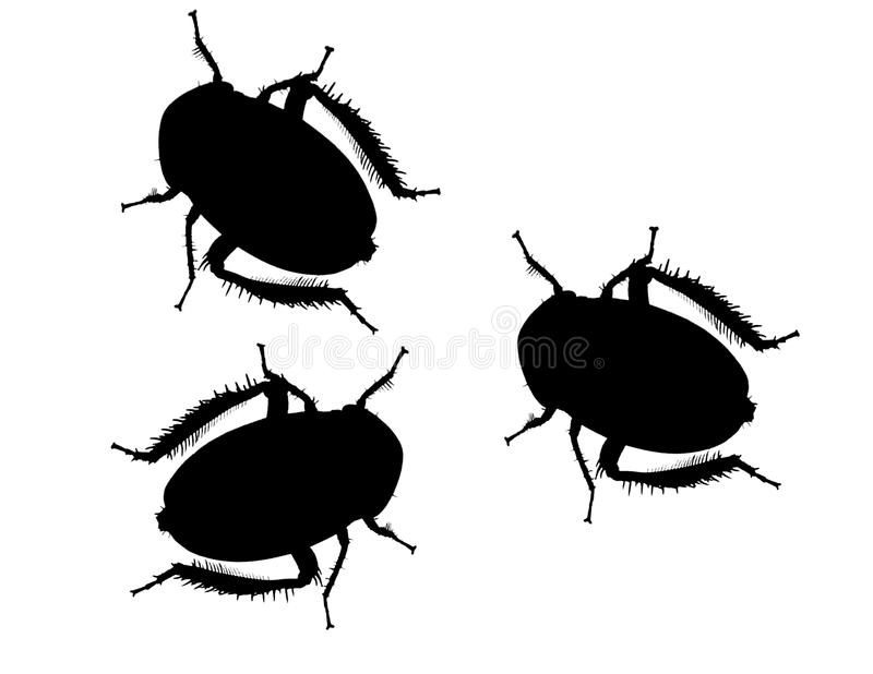 Black bugs. Three black bugs with hairy legs. Silhouetted on white stock photography