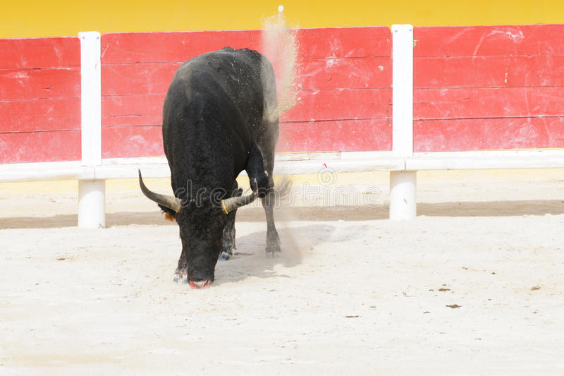 Download Black Bull Pawing Up Dust In A Bullring Stock Image - Image: 22456605