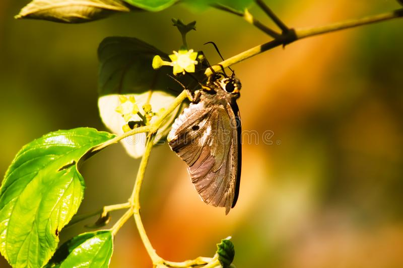 A black butterfly with amazing wings stock photo