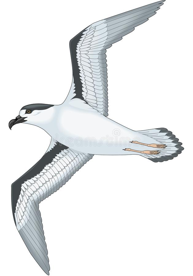 Free Black Capped Petrel Flying Illustration Stock Photography - 133908492