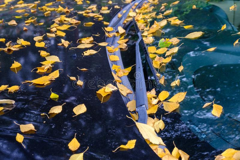 The black car is strewn with fallen dry yellow leaves in the fall. Autumn in the city. A black car is strewn with fallen dry yellow leaves in fall. Autumn begins stock photos