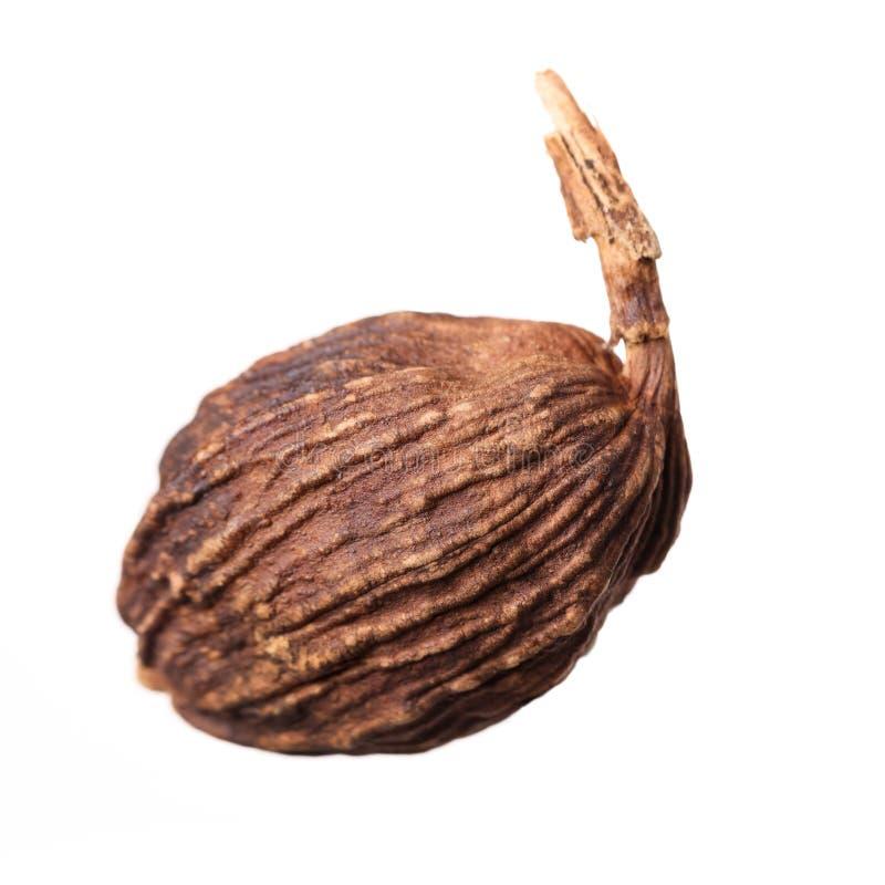 Black cardamom. Isolated on white background stock photo