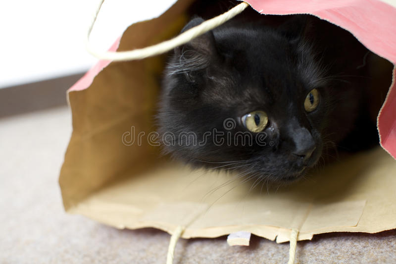 Black Cat. A lovely black cat in the shopping bag stock image