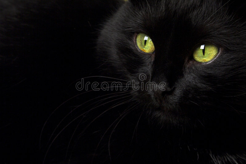 A black cat stock image