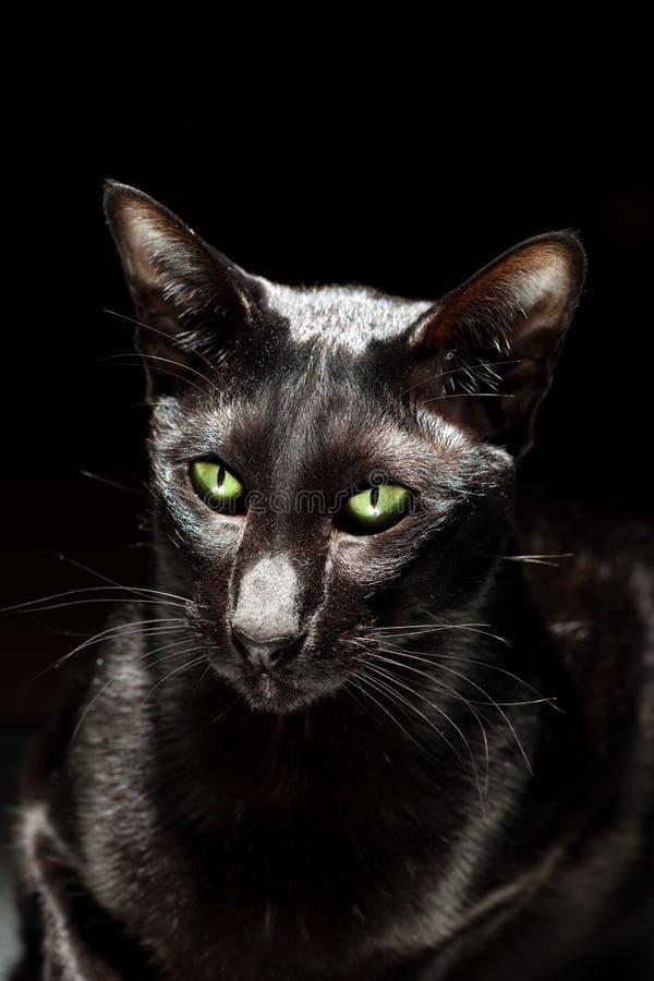 Download Black Cat Stock Photo - Image: 14145580