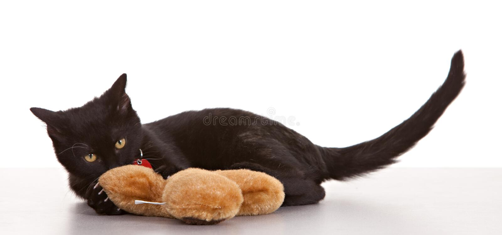 Black Cat stock photography