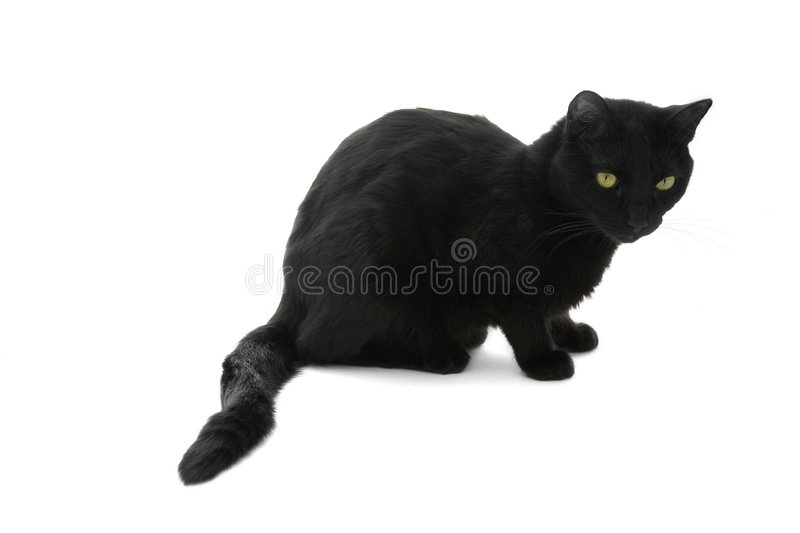 Download Black cat stock image. Image of luck, magic, domestic - 1746623