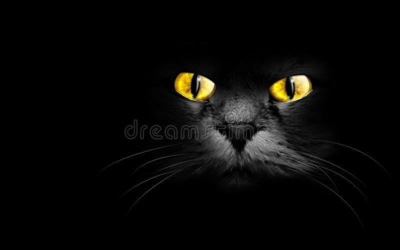 Black cat. Muzzle a black cat in the dark