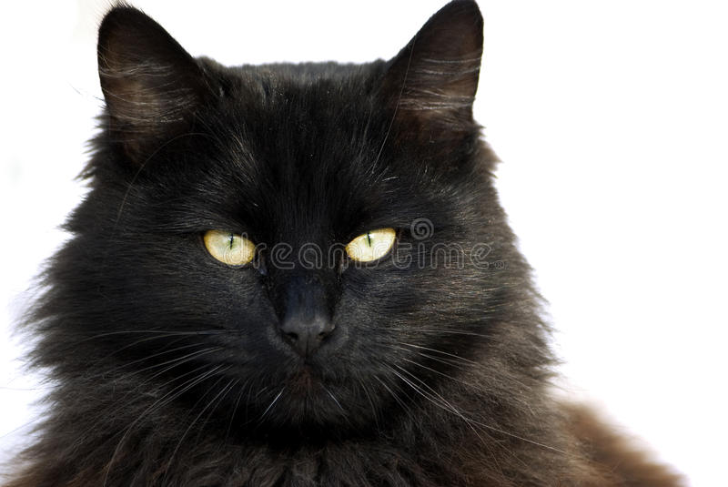 Black cat. Portrait, focus on green eyes