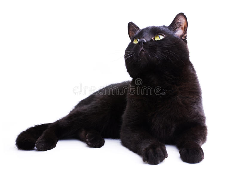 Download Black Cat stock photo. Image of shop, sitting, sign, animal - 23008824