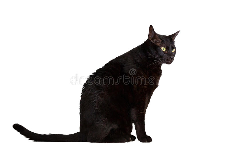 Download Black cat stock photo. Image of cutout, looking, side - 25423200