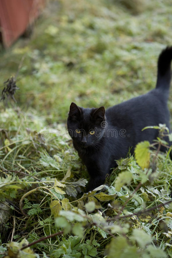 Download Black cat stock image. Image of pets, nobody, black, autumn - 27178129