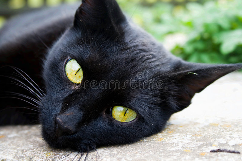 Download A Black Cat Stock Photo - Image: 2976630