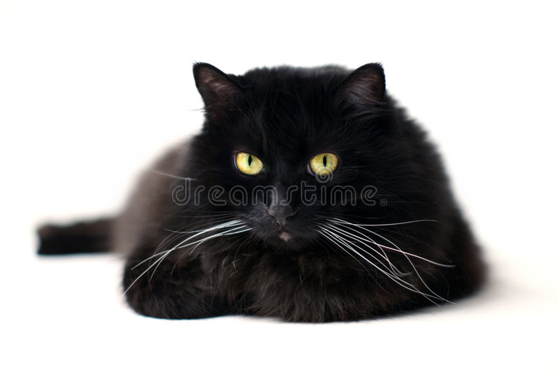Black cat. Isolated on white royalty free stock photos