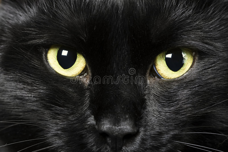 Black cat. Domestic animals: close-up of cat eyes
