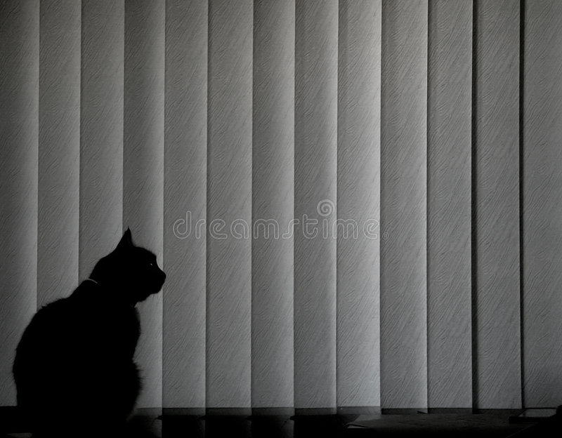 Black cat. Lonely black cat sitting at window and looking outside throw blinds stock photo