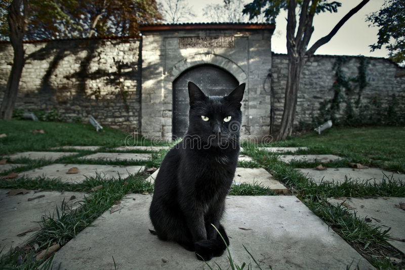 Download Black Cat stock image. Image of trees, green, black, scary - 4077433