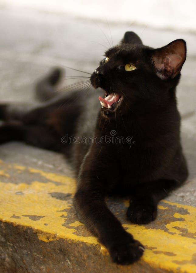 Download The Black Cat stock image. Image of black, street, yawning - 4345359