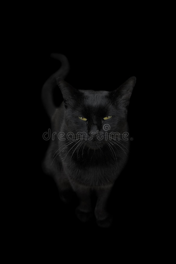 Free Black Cat Stock Image - 6659481