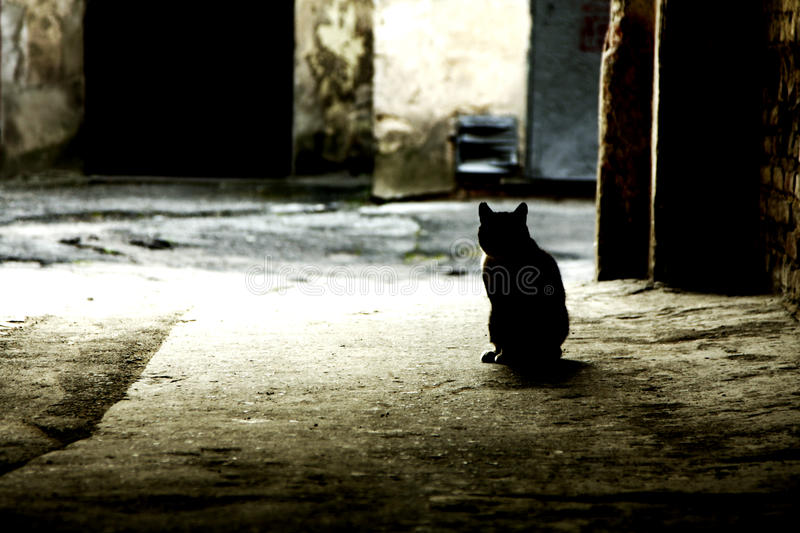 Black cat in the alley royalty free stock photos