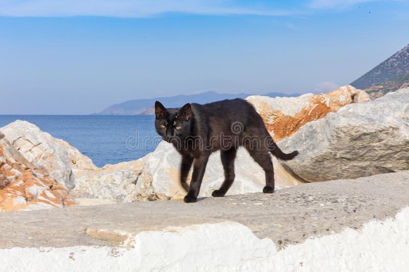 Black cat. On a background of the sea royalty free stock photo