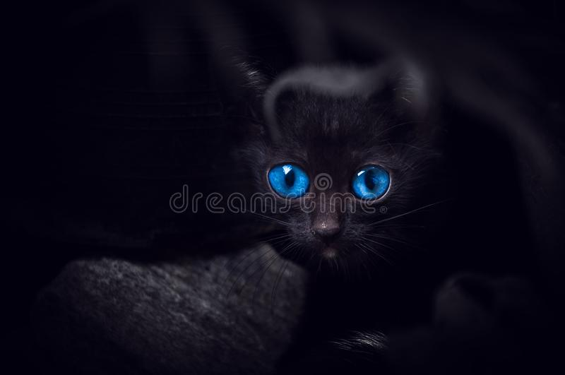 Black Cat With Beautiful Blue Eyes Animal Portrait Black Kitten Stock Image Image Of Head Kitty 158128247