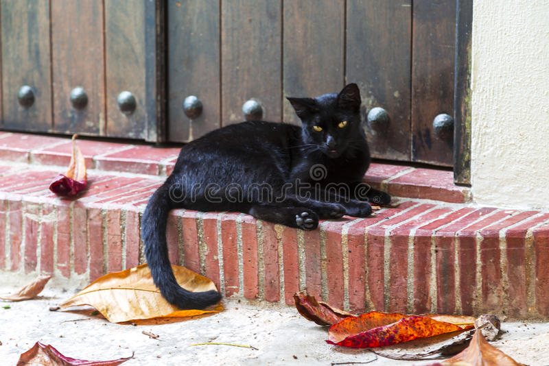 Black cat. Beautiful black cat relaxing on the doorstep with tongue showing with colorful fall leaves royalty free stock photo