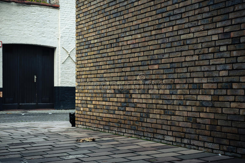 Black cat behind the brick wall on the street in Bruges, Belgium. 2016 stock image