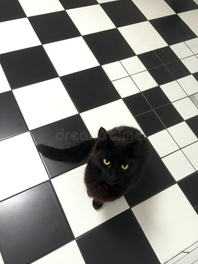 Black cat checking out the new tiles in the bathroom. royalty free stock image