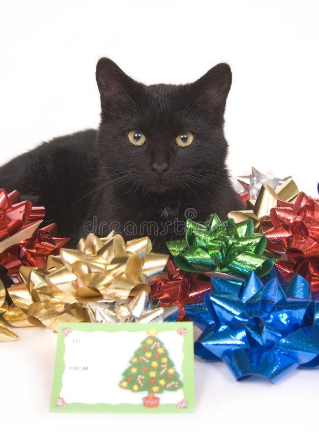 Download Black Cat And Christmas Bows Stock Image - Image: 1545373