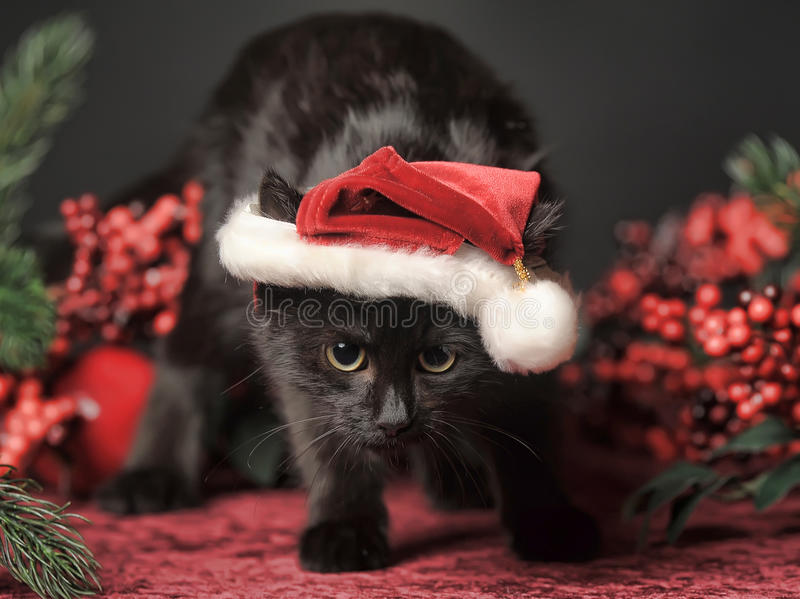 Black cat in a Christmas cap royalty free stock image