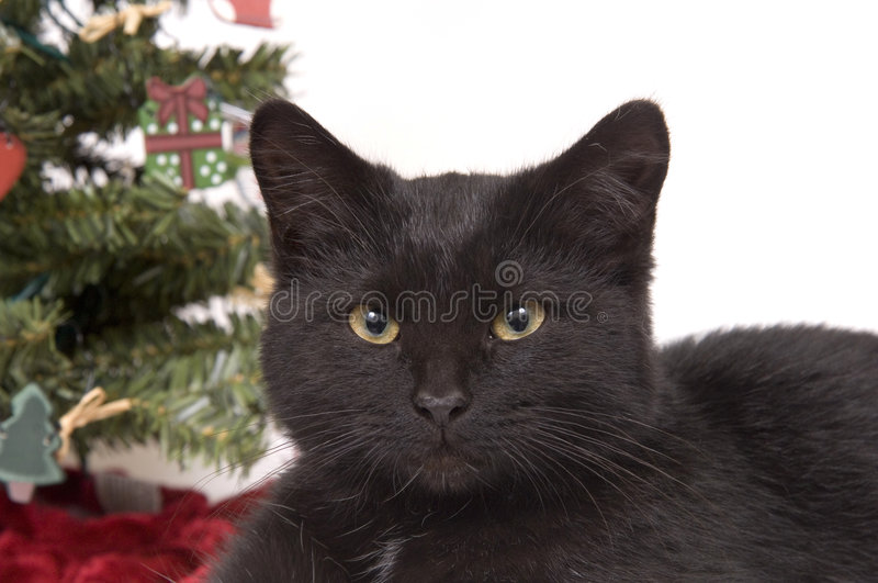 Black Cat With Christmas Tree In Background Stock Image