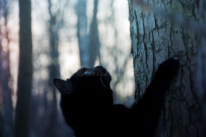 Black cat climbs a tree royalty free stock photography