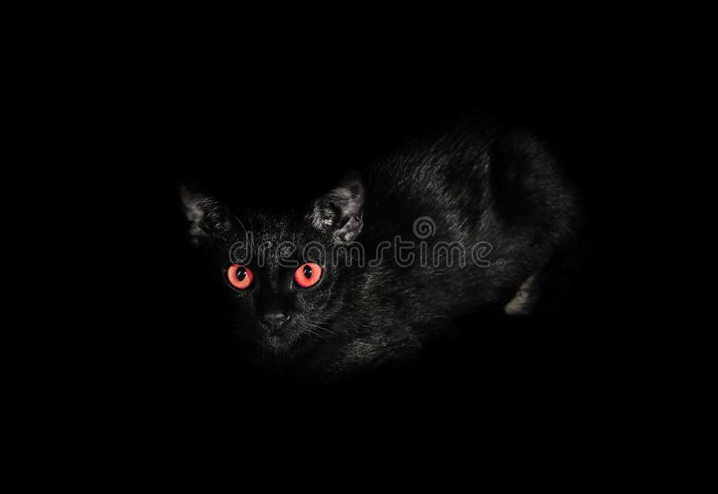 Black cat, Close up of the eyes with a red color being staring i royalty free stock photography
