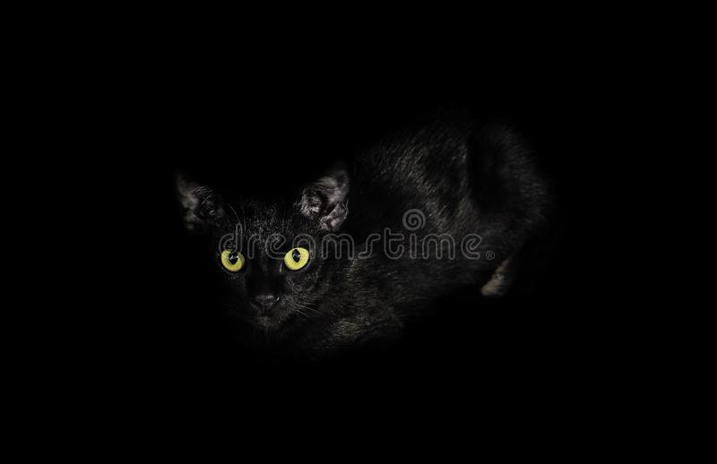 Black cat, Close up of the eyes with a yellow color being staring in the dark. selective focus. royalty free stock images