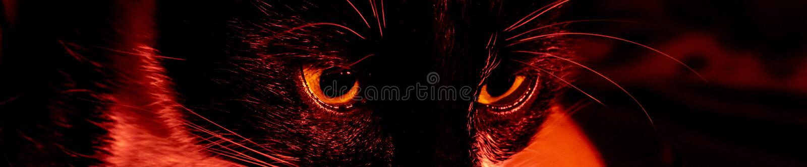 Black cat creepy sinister face portrait on black background stock photos