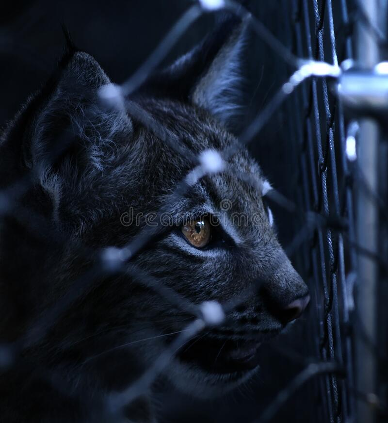 Black Cat On Cyclone Wire Fence Free Public Domain Cc0 Image