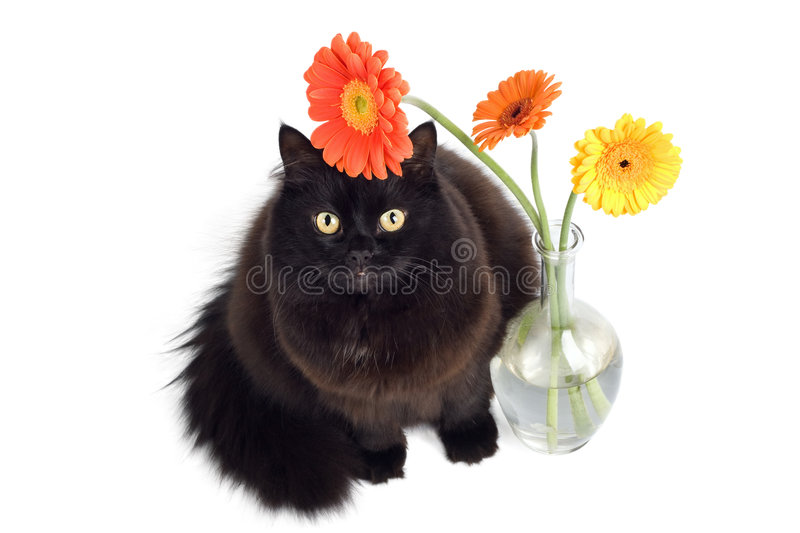 Black cat and daisies stock photos