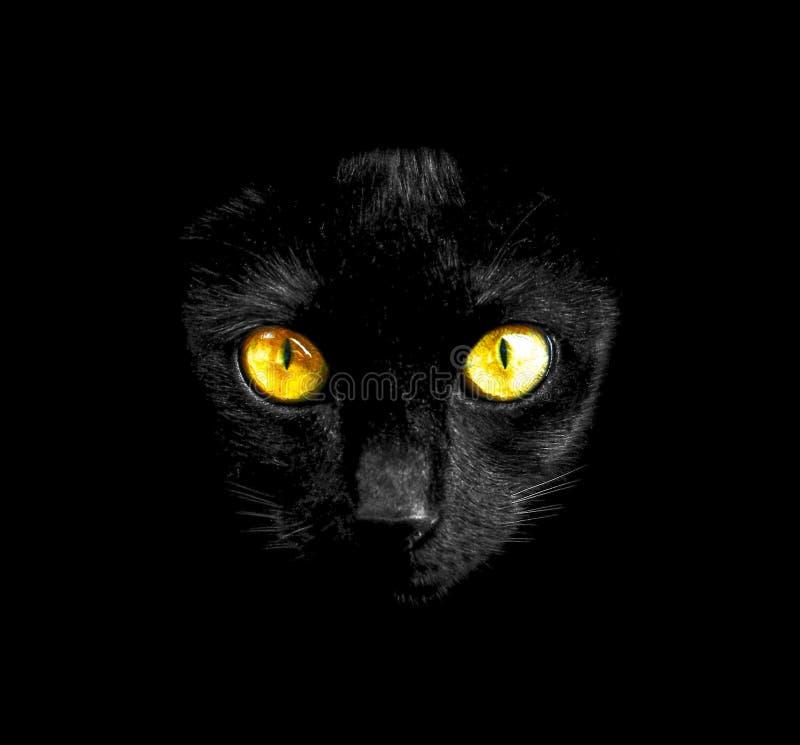 Black cat in dark close-up royalty free stock image