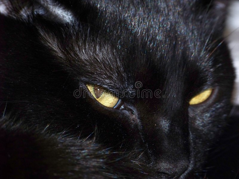 Black Cat Disturbed. A Black Cat that was awaken from a nap royalty free stock photography
