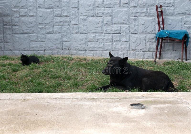 Black cat and dog lay on backyard grass. Black colored cat and dog lay on backyard grass. rural outdoor scene royalty free stock photo