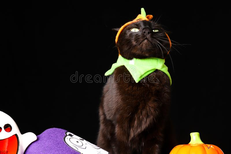 Black cat dressed as a Jack o Lantern stands on top of a wooden table next to Halloween candy against a black background. A black cat dressed as a Jack o Lantern stock images